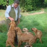 Jack Peckitt with four yellow labradors